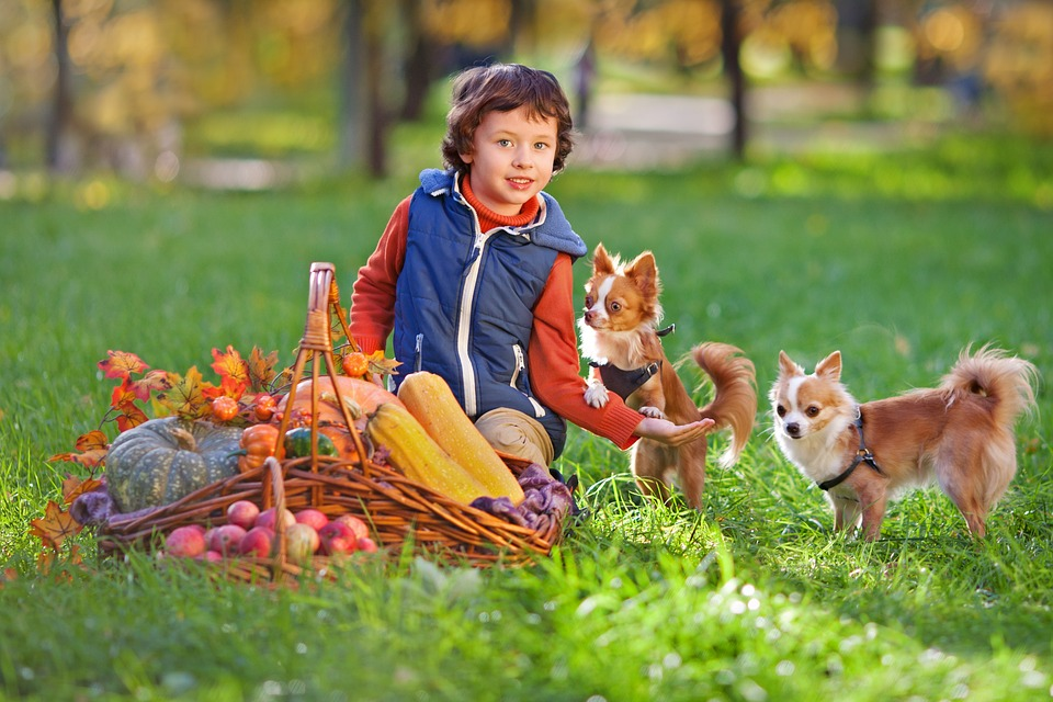 kid playing with dogs