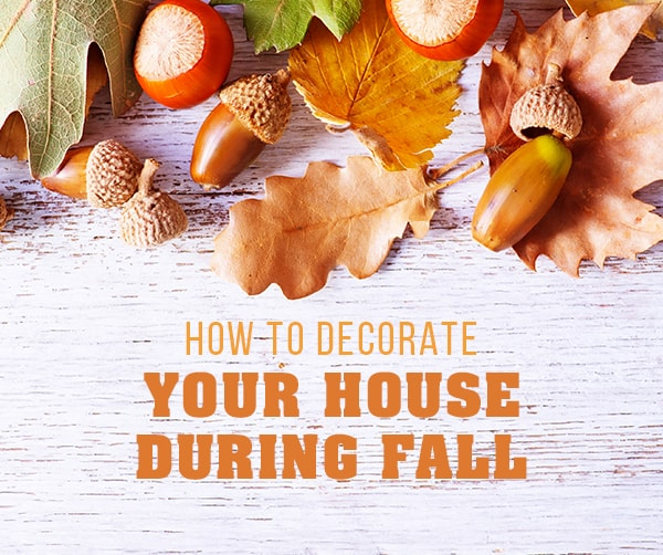 Fall Decor Trends You Have to See